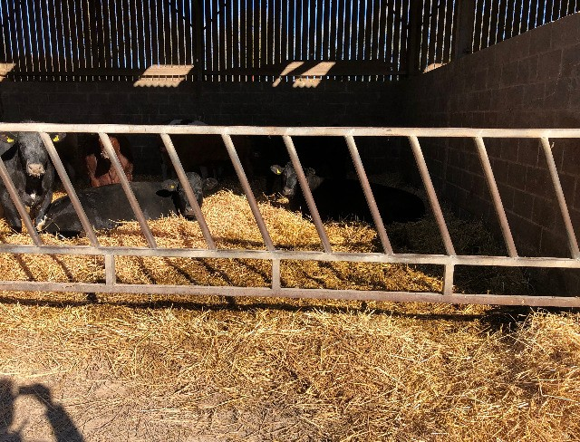 Cattle Feed Barriers